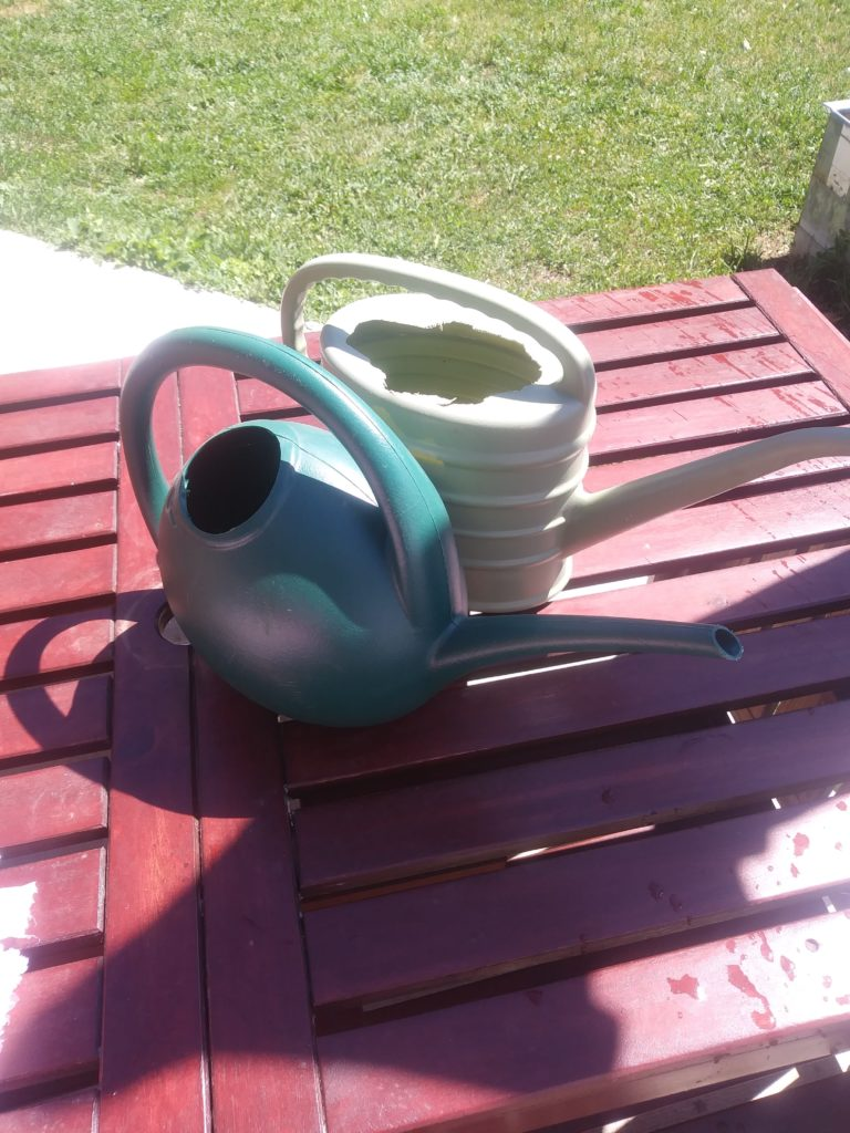 Watering cans filled with water to be warmed by the sun