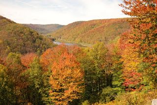 Fall leaves in Potter County