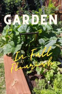 The garden in Full Flourish